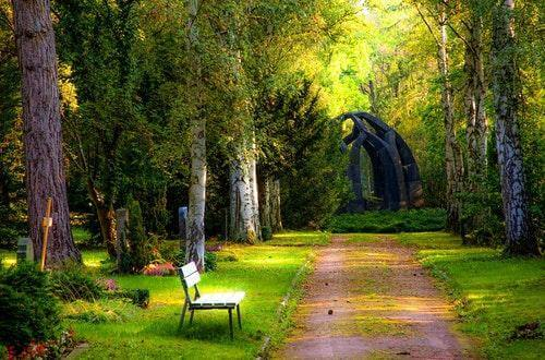 Trees and Bench in a Park