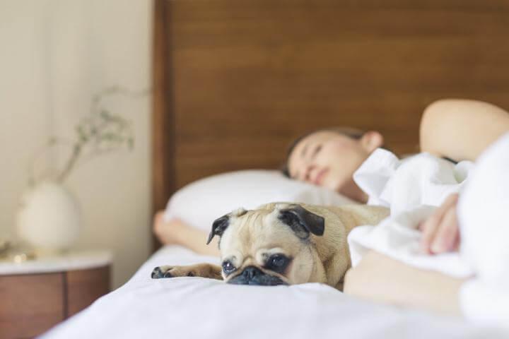 Dog and Woman Sleeping