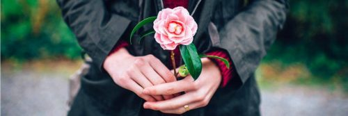 two hands holds pink flower