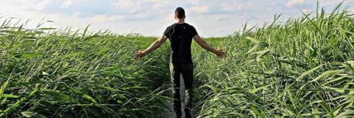 man facing backward walks along footpath between green field in blue cloudy sky