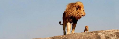 lions stand on rock