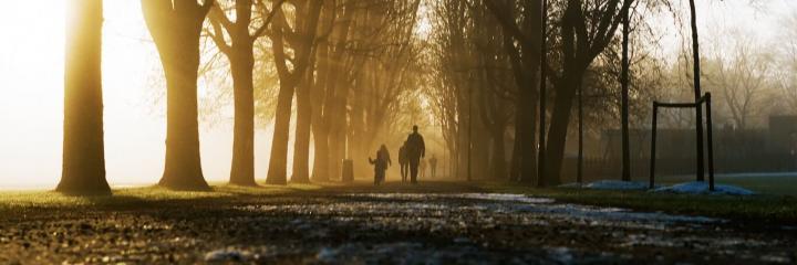 people walk along footpath between trees in sunny sky